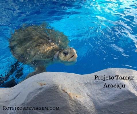 Oceanário no Projeto Tamar em Aracajú